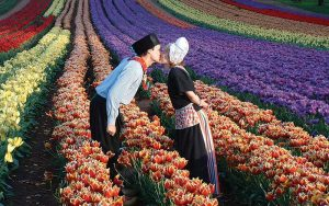 tesselaar-tulip-festival11